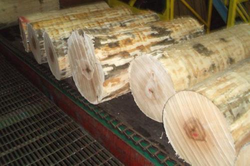 Tronchi di acero per la produzione di tavole